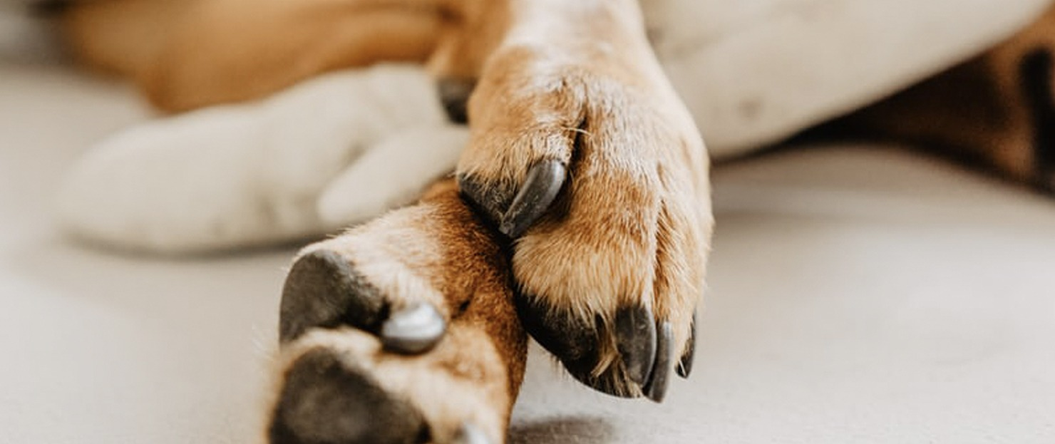 Huella de perro