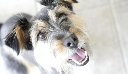 gos-somriuent